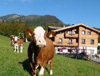 Außen Sommer Kuh.jpg